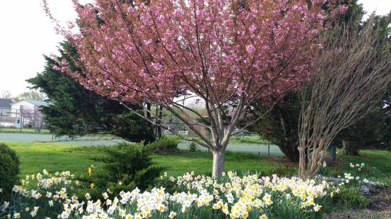 Tilghman Island Inn: Beautiful in Spring.