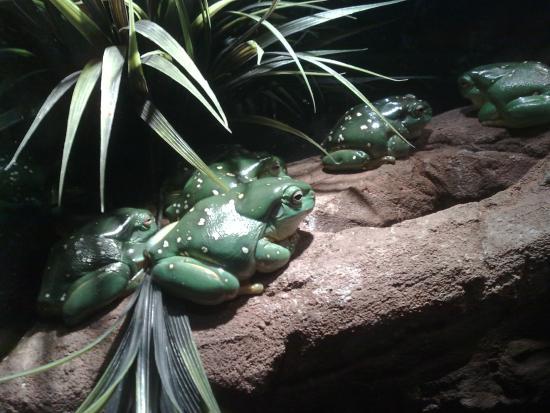 Australian Reptile Park Cafe