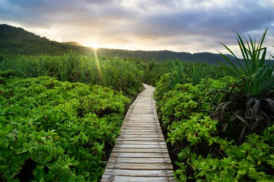 christmas island australia lily beach boardwalk