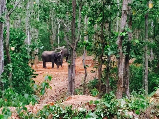 Kuldiha Wild Life Santuary