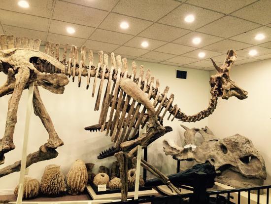 Stones 'N Bones Museum