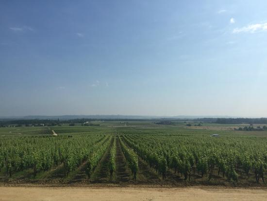 Bordeaux Saveurs : Yquem
