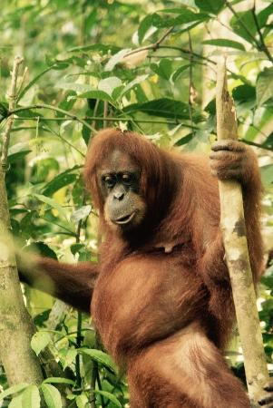 Sumatra Tour & Travel - Day Tour