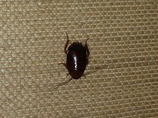Emerald Resort & Casino: Cockroach on wall in room