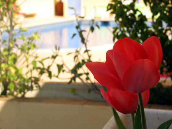 Hotel Apolo: Piscina