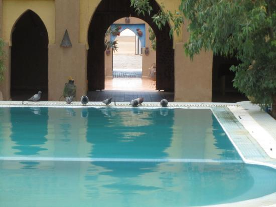 Auberge Dunes D'or : Pigeons drinking at the swimming pool