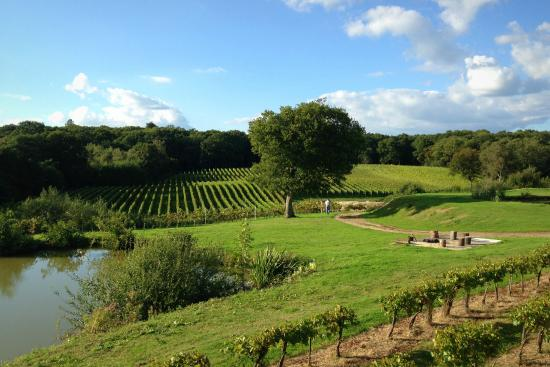 Bluebell Vineyard Estates