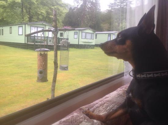 Glendaruel Caravan Park: Pets welcome  OScar our dog bird watching