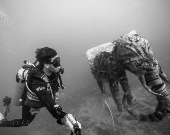 Dive Urge : Elephant dive in Lighthouse Dahab