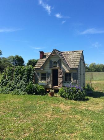 The Farmhouse Bed and Breakfast: Hen house!