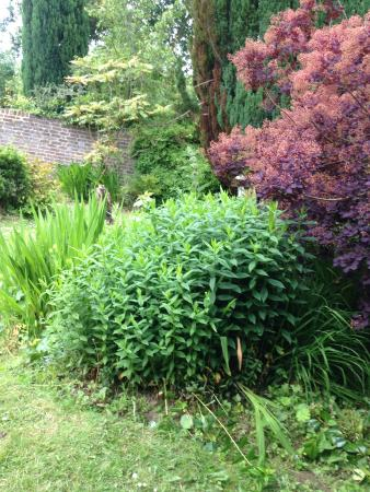 Tower House 1066: Gardens