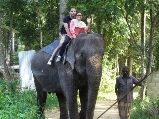 Bentota, ศรีลังกา: Elephant Riding at Pinnawala