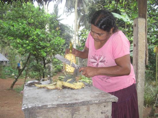 Bentota, Sri Lanka: at pineapple garden