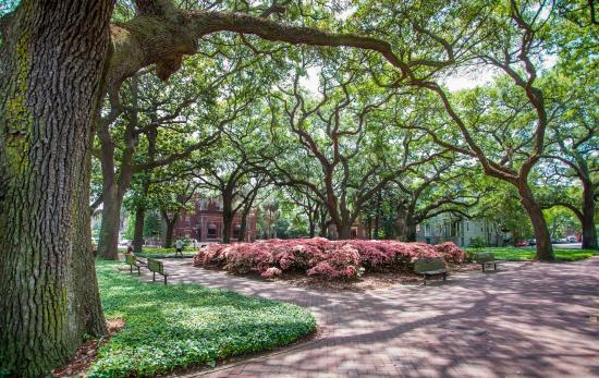 Capturing Savannah - Photography Tours: Pulaski Square's late blooming Pink Azalea's should defintely make you visit Savannah in May!