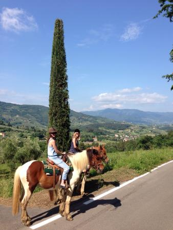 Lucca Horseriding : View of the luscious Tuscan hillside.
