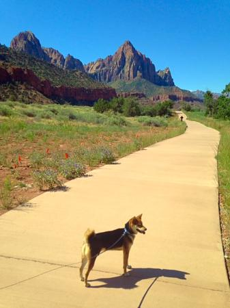 Pa'rus Trail: Trail with my pup.