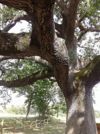 Agriturismo Torre Vecchia: Luoghi vicini da vedere