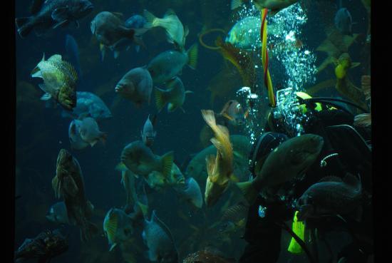 Picture Of Monterey Bay Aquarium