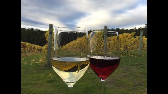 Lunawanna, Austrália: Come in and enjoy a glass of wine with a view over our vineyard