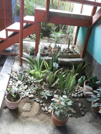 Nicaragua Guest House: Parte del Jardín