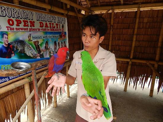 Wildlife Expo : Our guide shows birds in the expo
