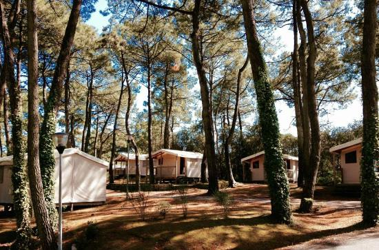 Camping Le Bois dAmour (FranceLaBauleEscoublac  ~ Camping Le Bois Roland