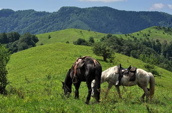 Horseriding Bulgaria - Day Tours