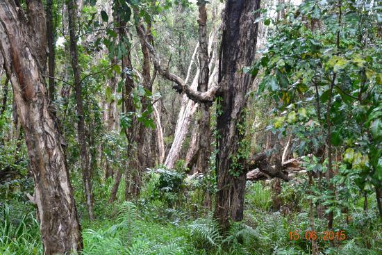 Fairways Golf & Beach Retreat: Paperbark Forest