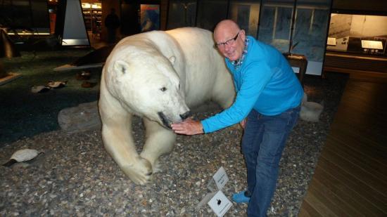 Svalbard Museum: Utstoppet isbjørn fra Svalbard