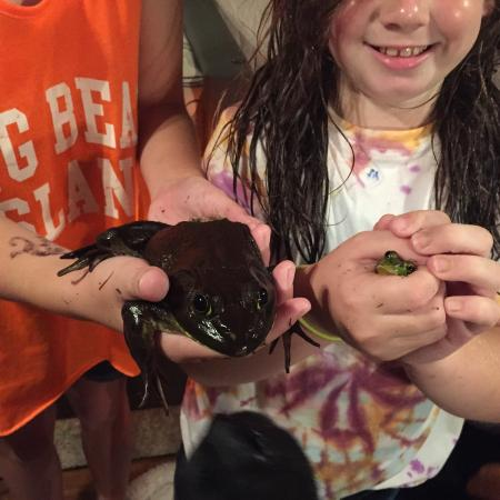 Butterfly Camping Resort: These are the frogs we caught, they are huge!!!