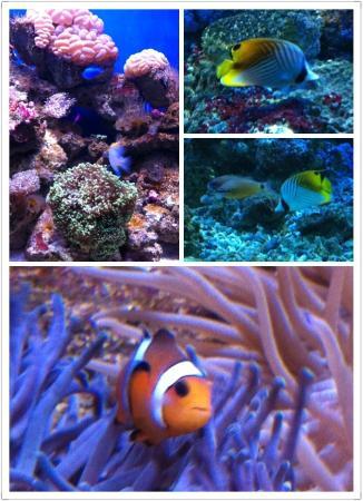 Sun Asia Ocean World : ... .jpg: fotograf?a de Sun Asia Ocean World And Polar World, Dalian