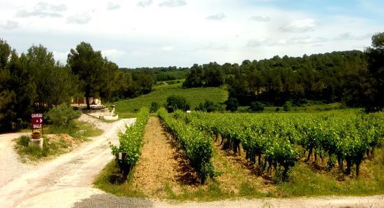 Assas, Francja: Domaine de Cassagnole