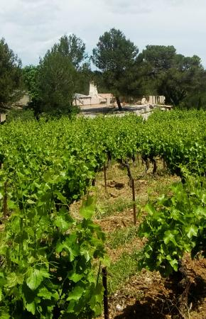 Assas, Francia: Domaine de Cassagnole
