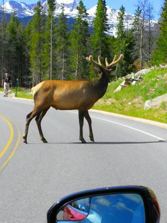 Mary's Lake Lodge Mountain Resort and Condos: frequent scene while driving