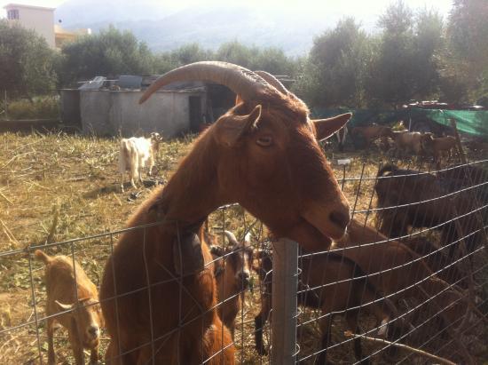 Kritiki Farma Donkey Tours