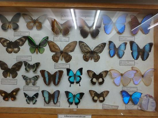 Photo 4 - Museum of World Insects and Natural Wonders, Chiang Mai - TripAdvisor