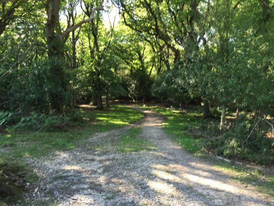 Ocknell and Longbeech Campsites: Lovely strolls through the Forest