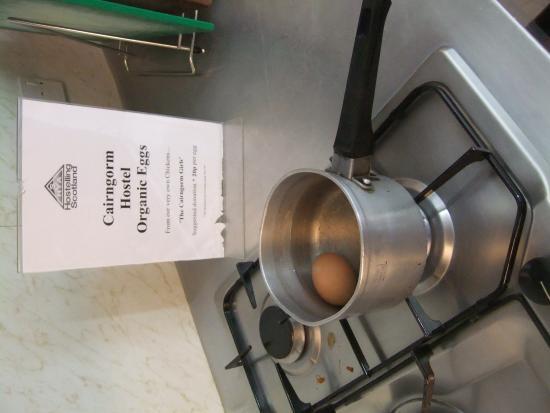 Cairngorm Lodge Youth Hostel: Eieren van kippen uit eigen tuin, heel vers!