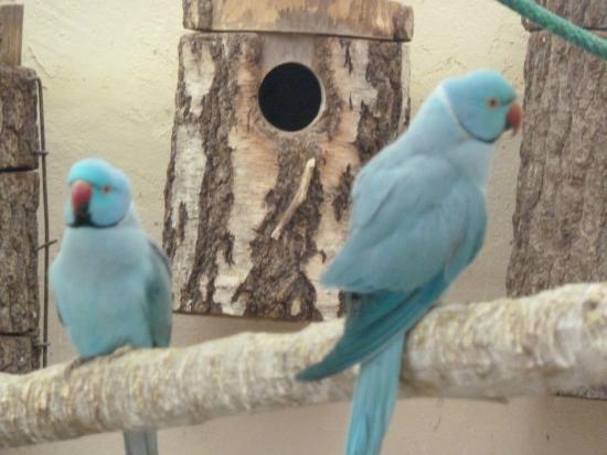 Le Jardin des bêtes : Oiseaux exotiques