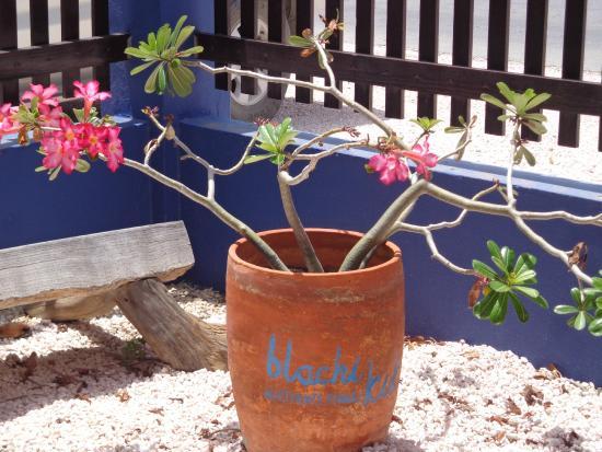 Blachi Koko Apartments Bonaire : blachi koko