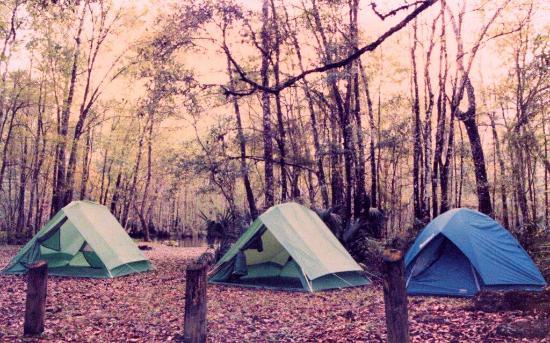 Ocala National Forest: campsite