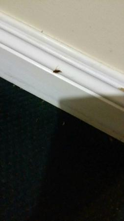 El Patio Inn: Roach infested