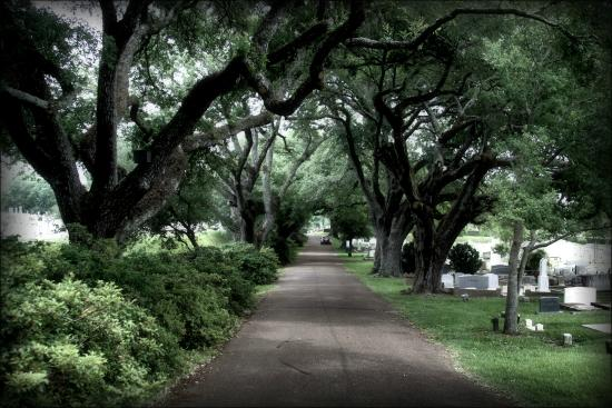 Main entrance road to Natchez City Cemetery