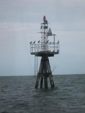 Monomoy Island Excursions: Birds on top of a buoy