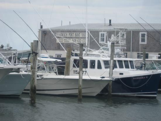 Monomoy Island Excursions : Scenery along the ride