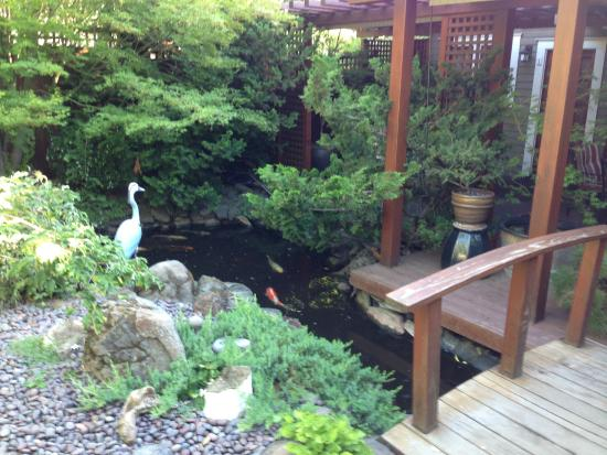 Cowslip's Belle B & B and Boutique Vacation Rentals: Koi Pond