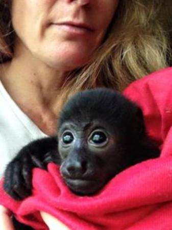 "Puerto Jimenez, Kosta Rika: Too young to survive on her own, Perla will be cared for and offered a ""soft release""."