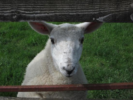Collinstown, Irland: Friendly farm resident