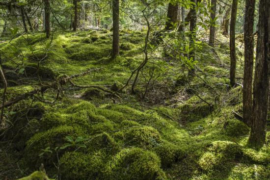 Sisters, OR: McKenzie River Walk Moss Covered