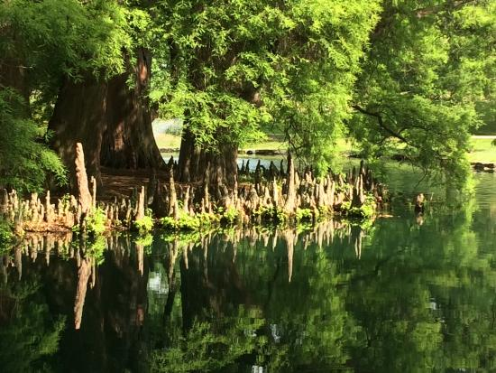 Spring Grove Cemetery & Arboretum: Interesting trees and roots that resemble stalagmites.